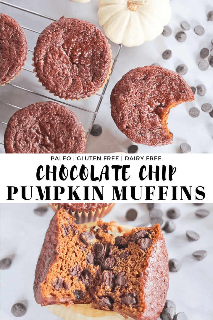 Chocolate Chip Pumpkin Muffins cooling on a wire rack and one cut in half showing the inside of the muffin.
